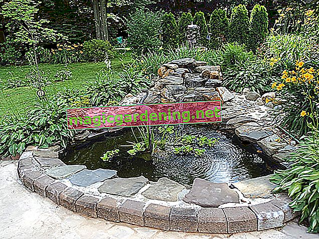 Kendiniz bir dere ile bir bahçe havuzu inşa edin ve oluşturun