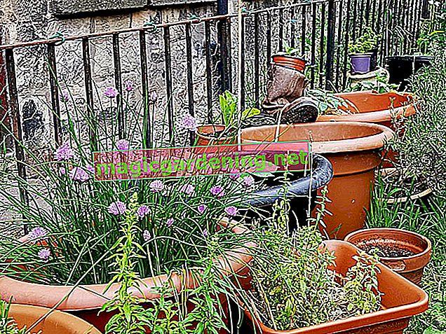 Giardinaggio in tutte le stagioni