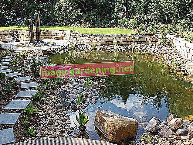 Upadljiv pogled: vodopad u vrtnom ribnjaku