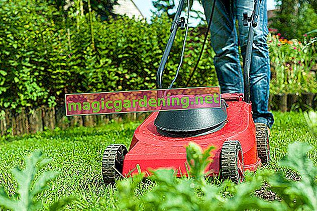 Pravilno košenje travnjaka