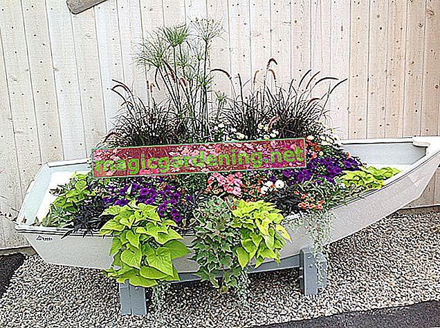 Plant a planter