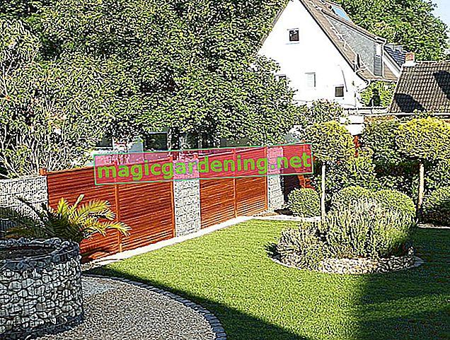 Vestire il muro del giardino - suggerimenti per un restyling