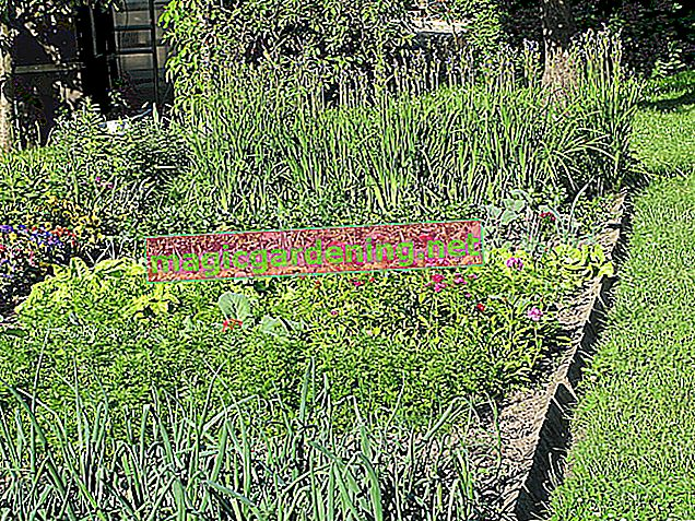 Examples of cultivation planning in the vegetable patch