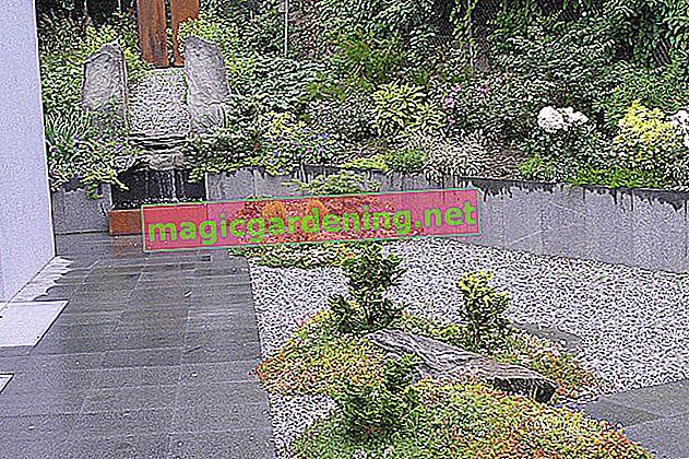 Crea e progetta un giardino in ghiaia - passo dopo passo
