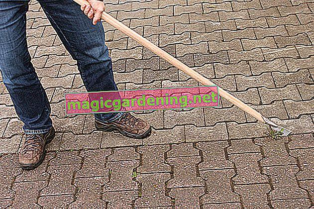 Ubijte korov herbicidima