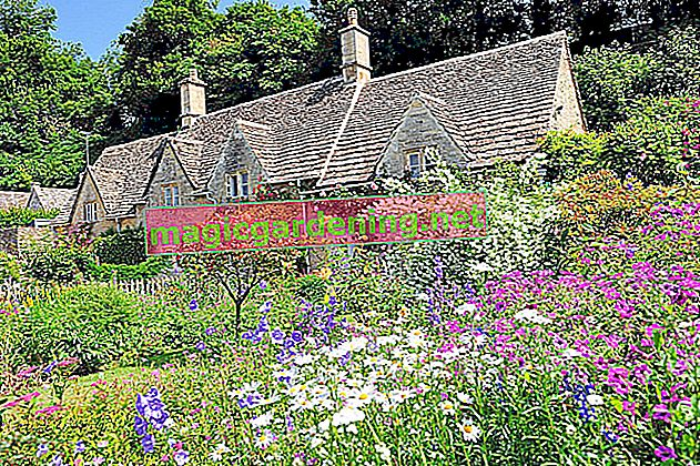 Cottage Garden Flowers: A Selection of Perennial Plants