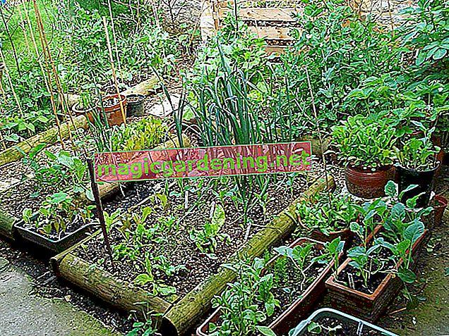 Stvorite samodostatan vrt