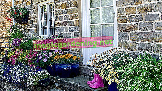 Učini prednji vrt na sjevernoj strani lijepim - ideje za sadnju