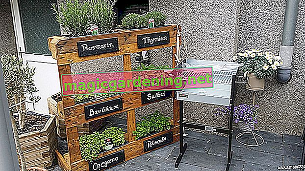 Herb bed in the balcony box - 3 planting suggestions for gourmets