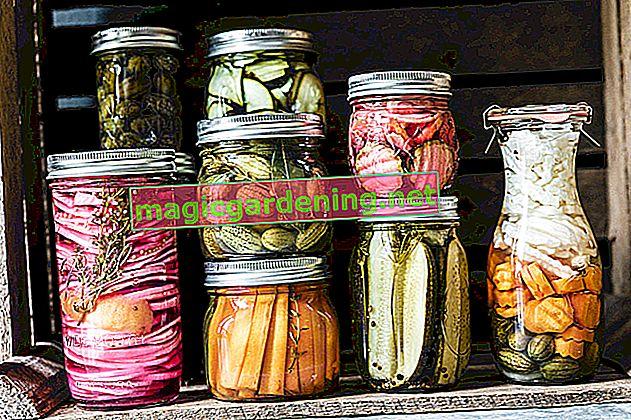 Peperoncini sottaceto - ricetta e istruzioni