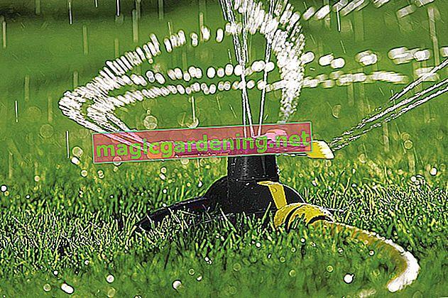 Prskanje travnjaka - savjeti za pravilno zalijevanje travnjaka