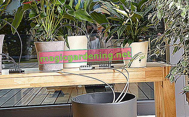 Kako instalirati navodnjavanje za balkon bez priključka za vodu