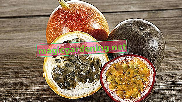 The difference between passion fruit and maracuja