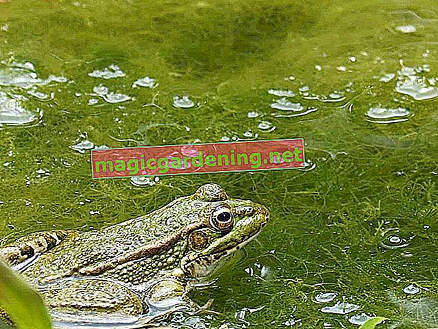 Prepoznajte i borite se protiv algi u bazenu