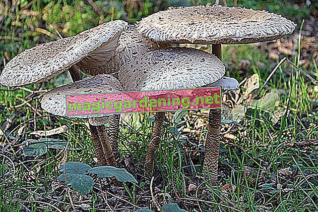 Asciugare i funghi dell'ombrellone: ecco come funziona