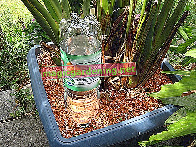 Un'irrigazione brillante per il vaso di fiori