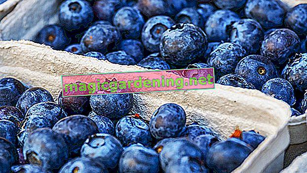 Skladištite kestene - na ovaj način održavate voće svježim