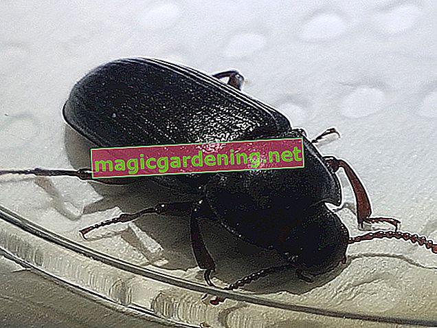 Rileva e combatti gli insetti in casa