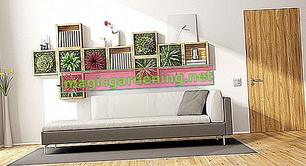 Create vertical gardens: indoors and outdoors