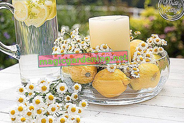 Zamrznite zalihu limuna