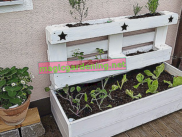 How to build a flower box from pallets yourself