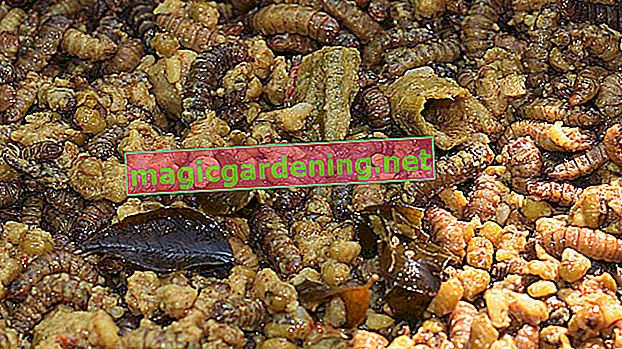 Maggots in the bio bin - cosa fare?