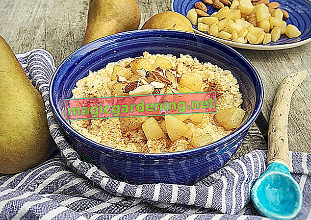 The healthy cereal meal - roasted oatmeal
