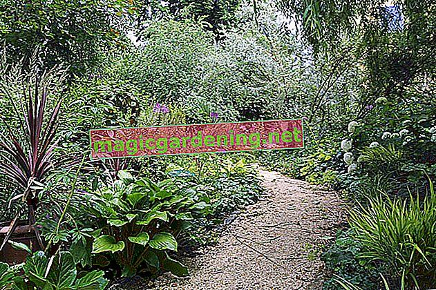 6 alberi sempreverdi a crescita rapida per il giardino