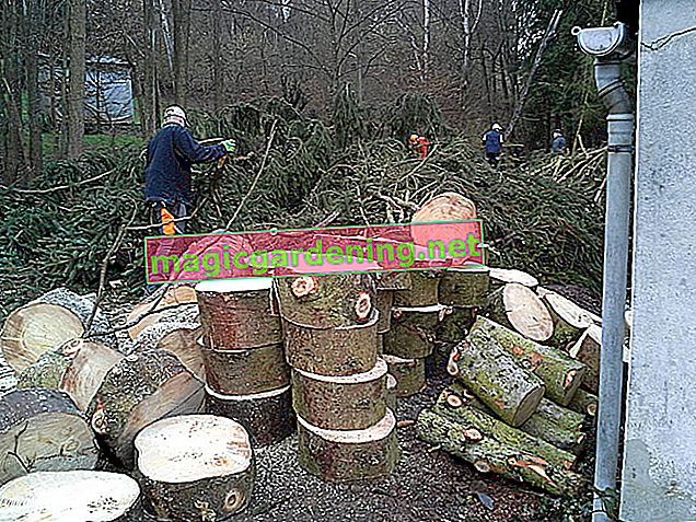 What does it cost to have a tree felled by a specialist?
