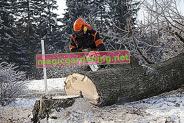 Felling tree approval