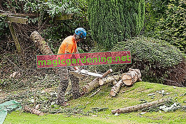 Approve tree felling