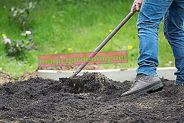 Dig up the lawn with a tiller