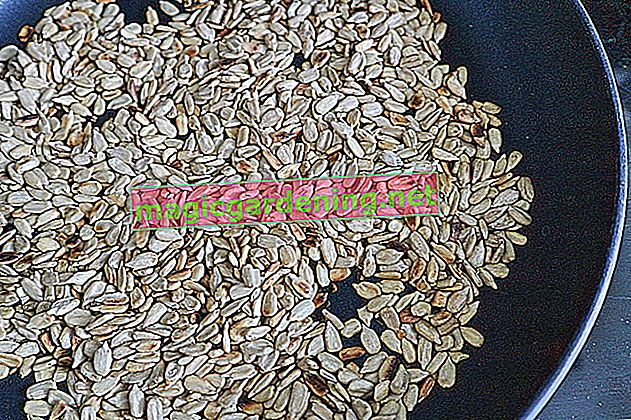 Pečenje sjemenki suncokreta - moguće sa ili bez ljuske