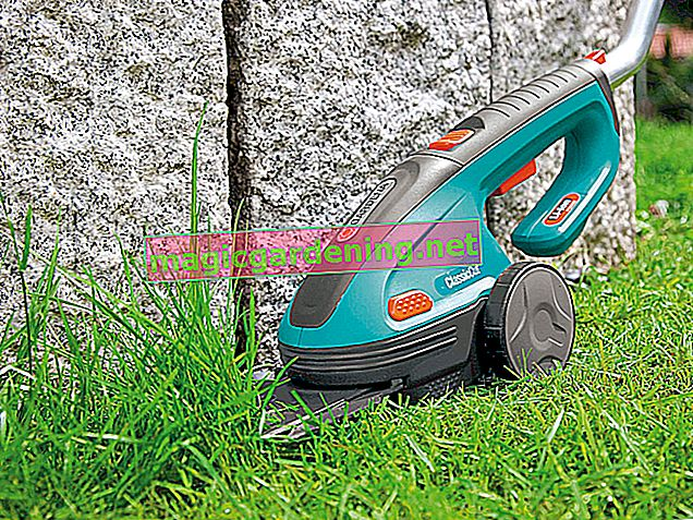 Lawn edger test 2020: the best models in comparison