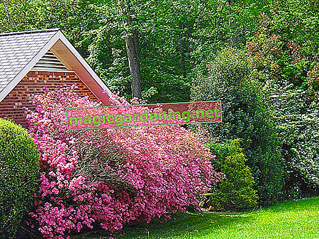 Flowering shrubs as a decorative privacy screen in the garden