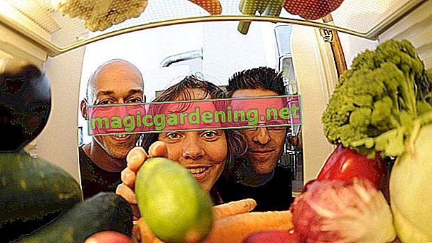 Pravilno skladištenje jagoda - ovako možete to učiniti besprijekorno