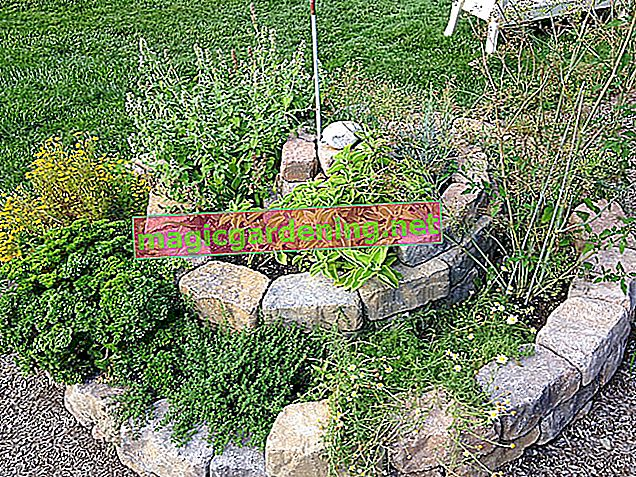 Creating a herb bed - hints, ideas and examples