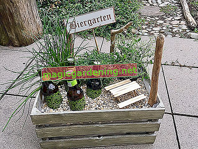 La bonne façon de créer un jardin d'herbes aromatiques - des instructions à faire soi-même