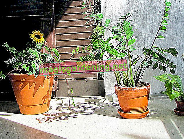 C'est ainsi que vous vous assurez que vos plantes de balcon sont arrosées pendant vos vacances