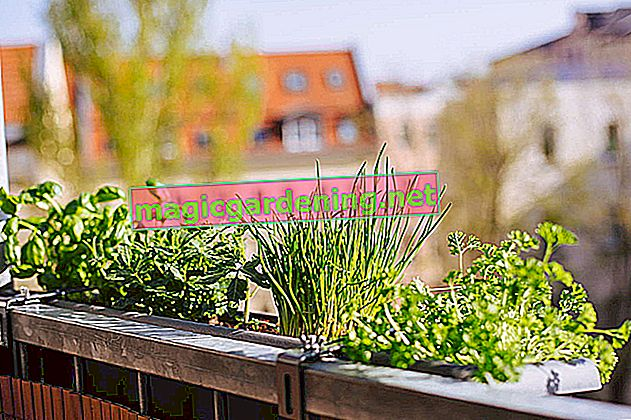So you can create a herb garden on the balcony