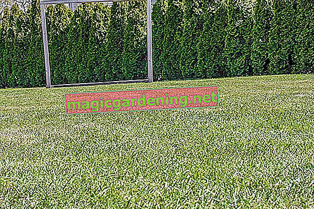 Scarifying the lawn correctly - why, when and how?
