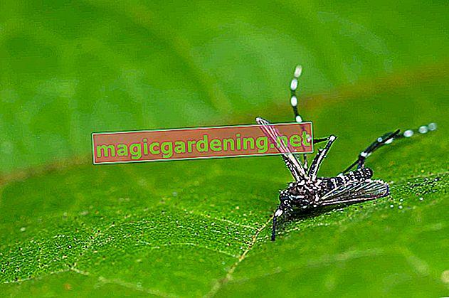Les meilleures plantes d'intérieur contre les moustiques