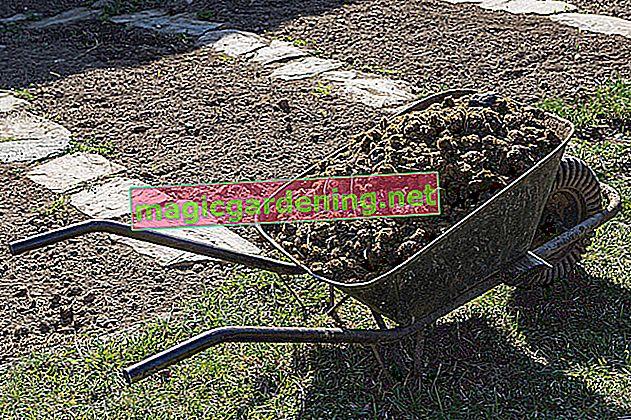 Gnoj preslice je izvrsno gnojivo