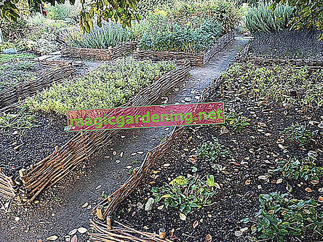 How to avoid waterlogging in the raised bed