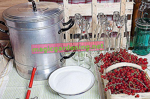 Medeno slatki voćni sok: sok od dunje