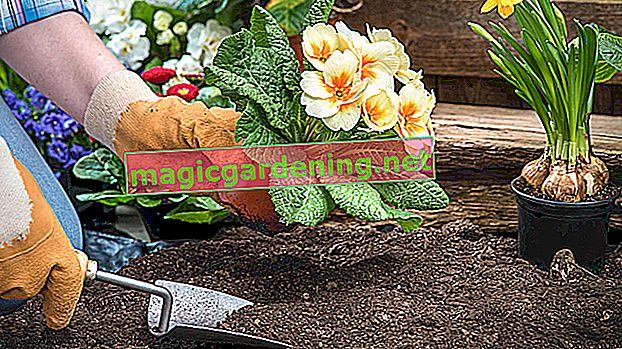 Pravo tlo za borovnice u vrtu