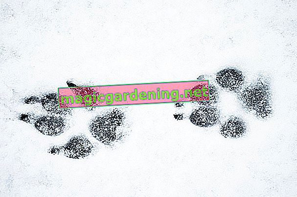 animal-tracks-in-the-snow