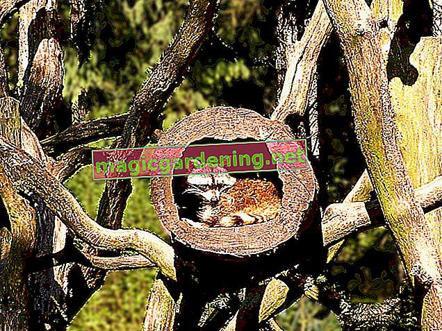 Malattie dei cetrioli da serra: cosa fare?