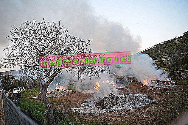 Bruciare i rifiuti del giardino: è permesso?