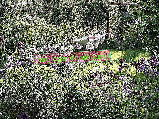 Le meilleur emplacement pour le saxifrage dans le jardin